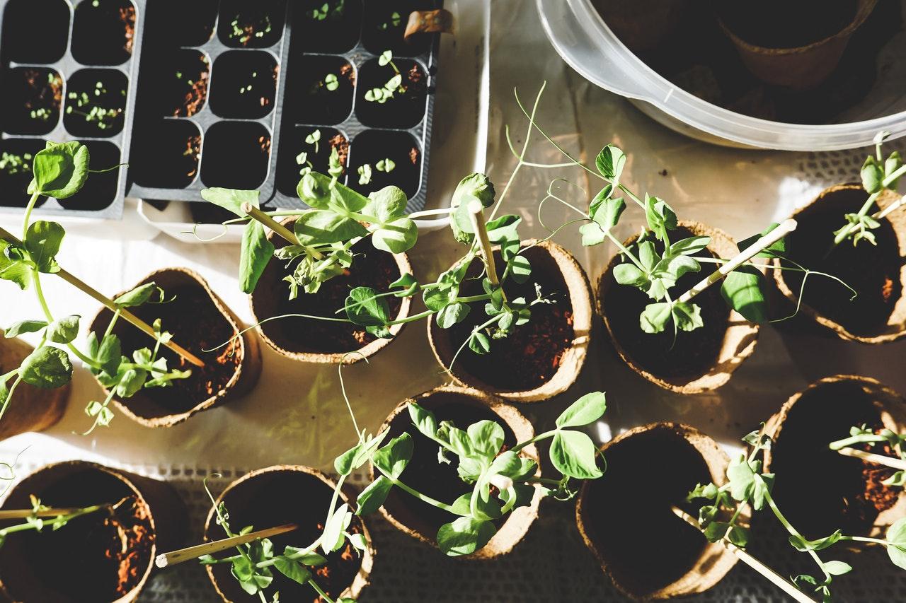 """Hvad er """"Urban gardening"""" og sådan kommer du i gang!"""