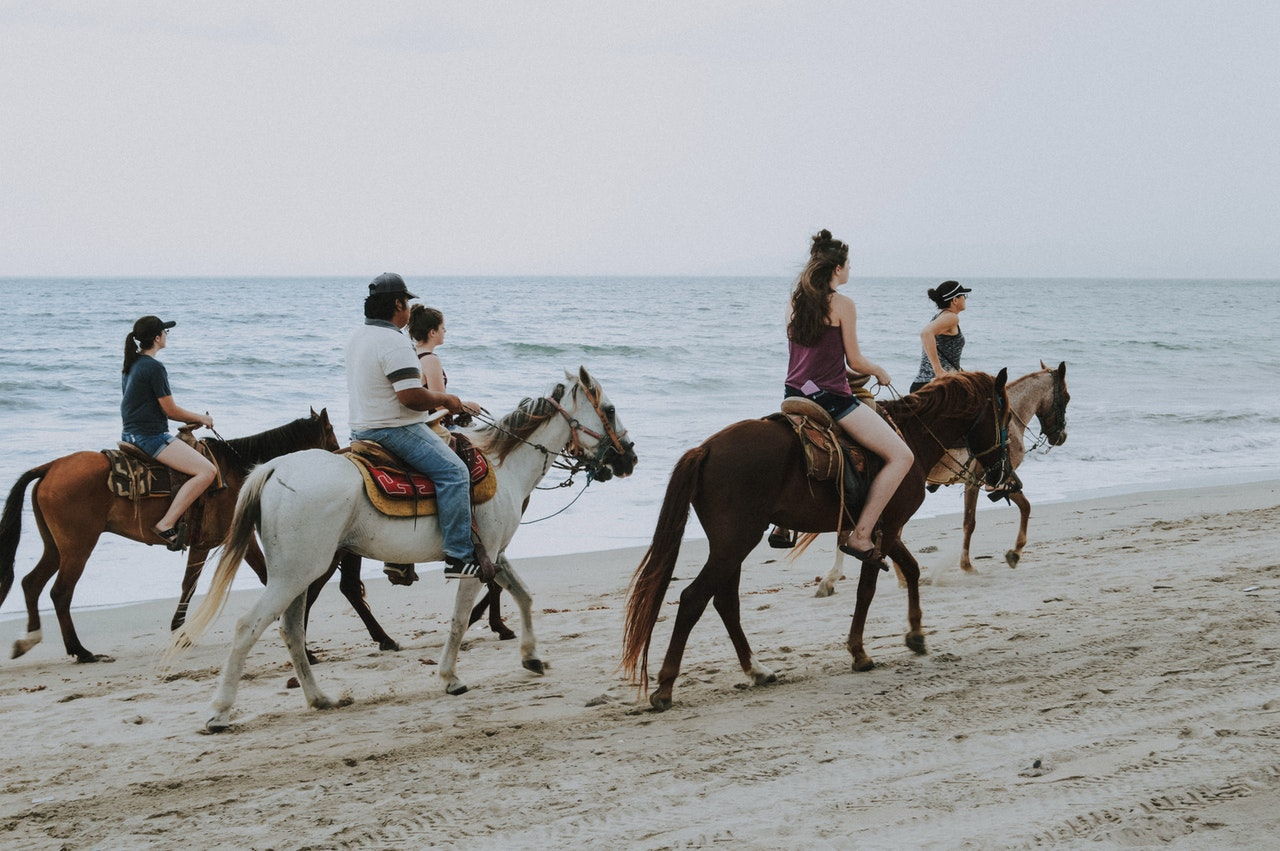 Horsepartner: Leverer hesteudstyr, tøj og sadler til hele landet